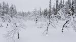 Lumisateen jälkeen.jpg