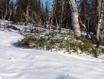 Lunta vähän